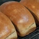 best bread recipe ever
